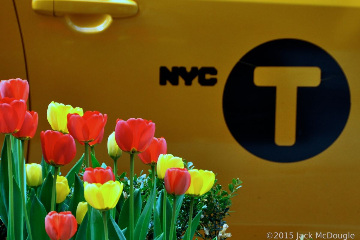 Flower Festival In New York City Middot Hidden Garden Nyc Photo Of The Uws 39 S Tulip